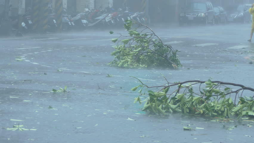 New Taipei City, Taiwan. September 27, 2016: Trees blowing in surge of typhoon Wind and Rain in city streets with cars driving past