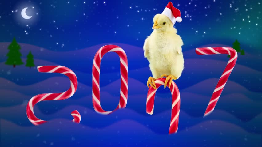 funny 2017 chinese new year concept with text small rooster slipping on the candy cane - Chinese New Year Video