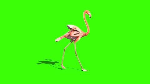 Pink Flamingo Walks Side Green Screen