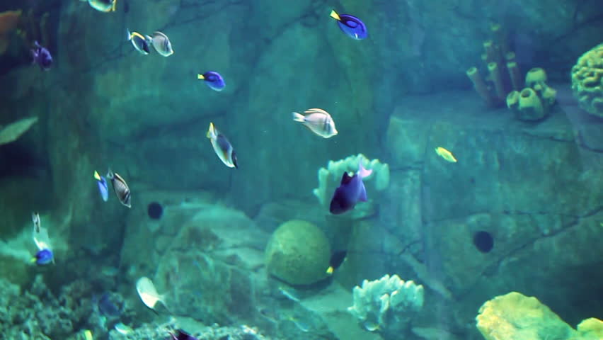 Aquarium with a large amount of tropical fish large and small. The Puffer Fish. | Shutterstock HD Video #21422665