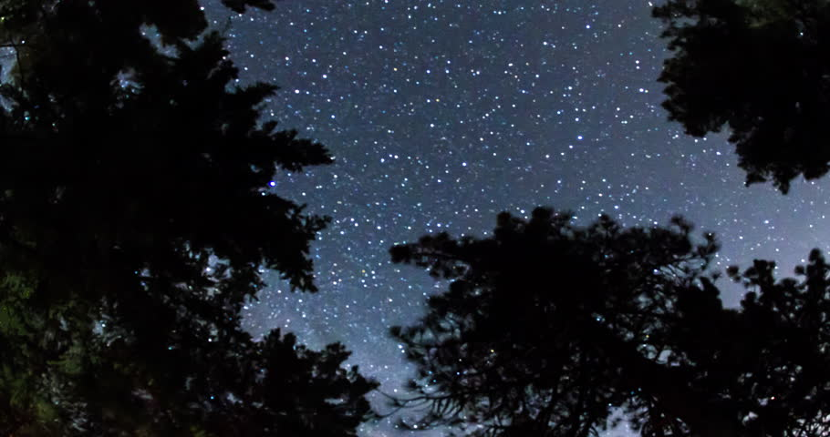 Milky Way Crossing The Night Sky Above the Treetops.