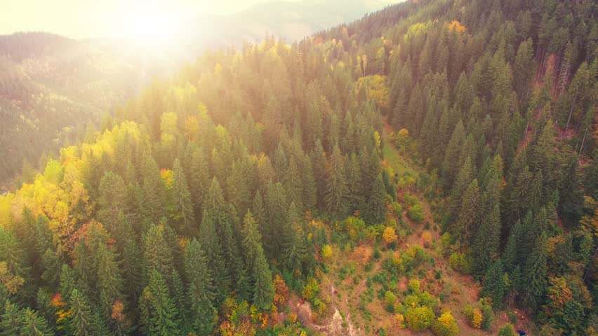 Aerial Drone Footage View: Flight over autumn mountains with forests, meadows and hills in sunset soft light. Carpathian Mountains, Ukraine, Europe. Majestic landscape. Beauty world. 4K resolution. | Shutterstock Video #21477814