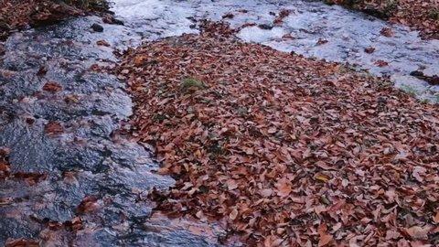 autumn landscape/autumn landscape (bolu-abant)