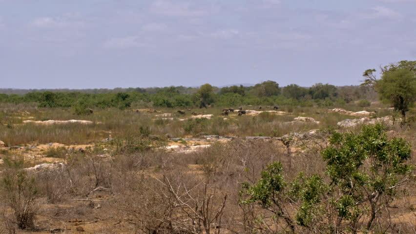 Big group of elephants in wilderness   Shutterstock HD Video #21667405