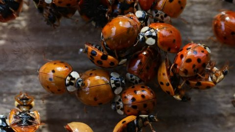 Collection of ladybirds on wooden background