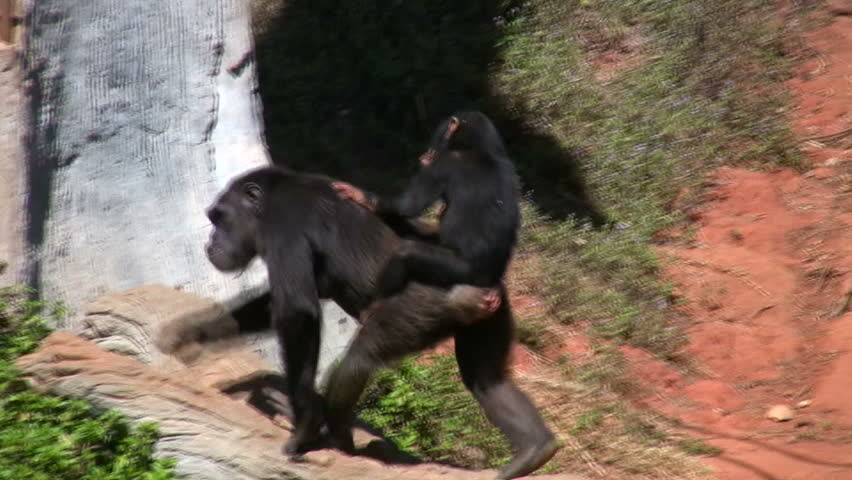 Header of primate