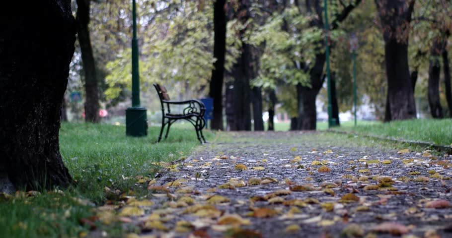 Autumn City Park With Rain Background Fall Raining Wet Rainy Weather