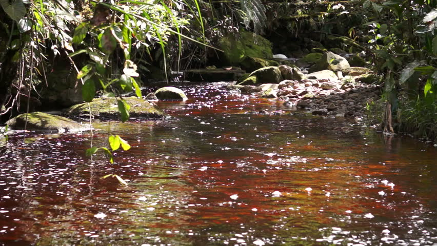 A tannin stained, red water creek running through the mountains in the rainforest of Ecuador bordering Peru.
