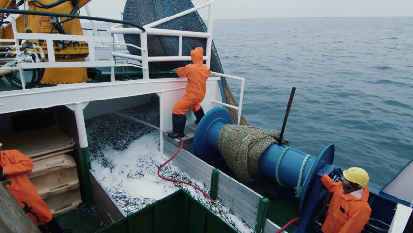Crew of Fishermen Open Trawl Net with Caugth Fish on Board of Commercial Fishing Ship. Shot on RED Cinema Camera in 4K (UHD).