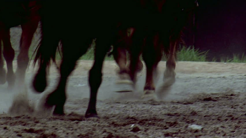 Running horses | Shutterstock HD Video #2195455