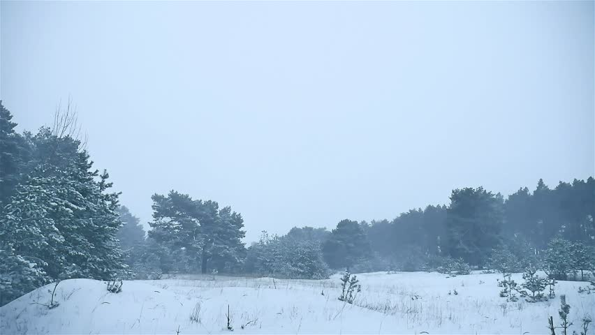 Snowstorm The Woods Snowing Winter Blizzard, Christmas Tree And Nature Pine  Forest Landscape   HD