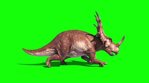 Styracosaurus Triceratops Run Side Static Loop Dinosaurs Jurassic Green Screen