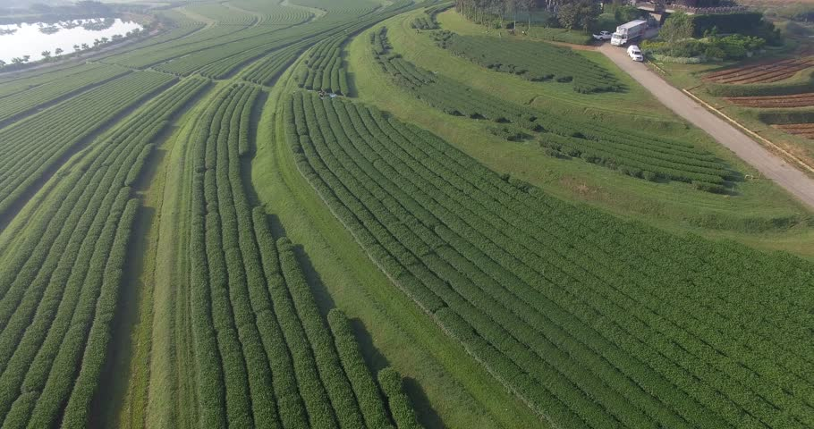 Fly over, Tea Plantation in north of Thailand | Shutterstock HD Video #22803115