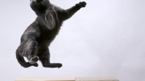 Gray cat playing with mouse toy on a string sequence of jumps in slow motion