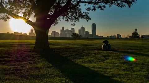 Night to dawn Time-lapse w/ Dallas skyline from park w/nice shadows and a cow