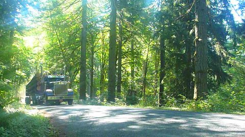 Logging truck drives with full load of timber through lush forest in Oregon.