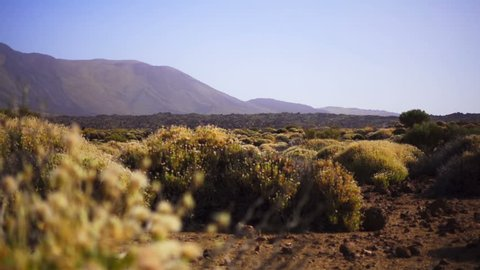 Small bushes on a background of mountains in the desert