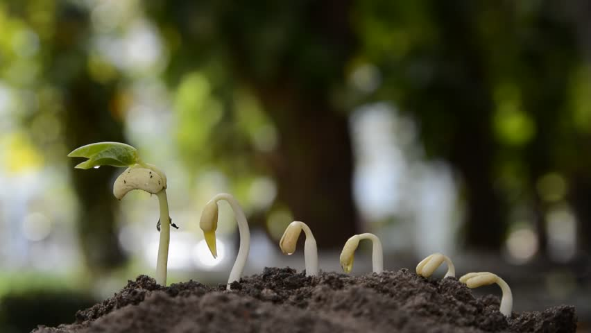 Seedling Agriculture And New Life Concept, Little Plant ...