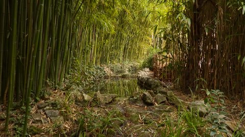 Stream in the bamboo forest.
