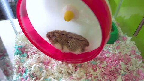 A brown hamster running on a wheel in cage.