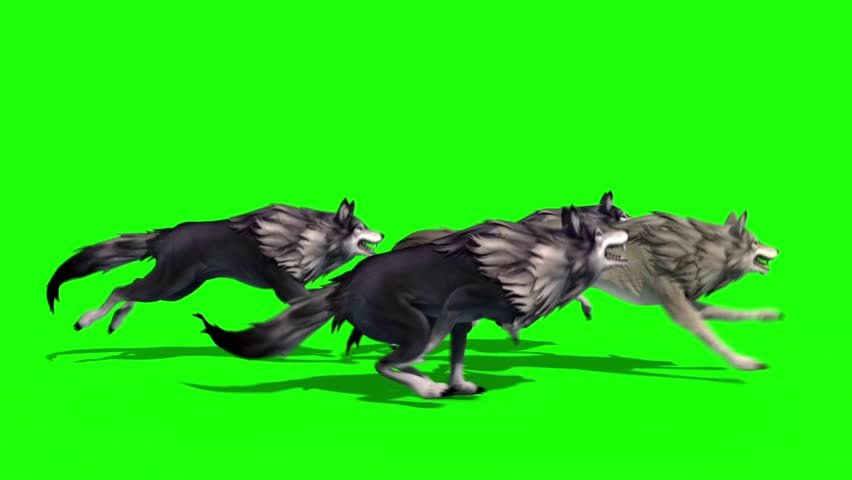 Herd of Wolves Run Side 3D Rendering Green Screen Animals