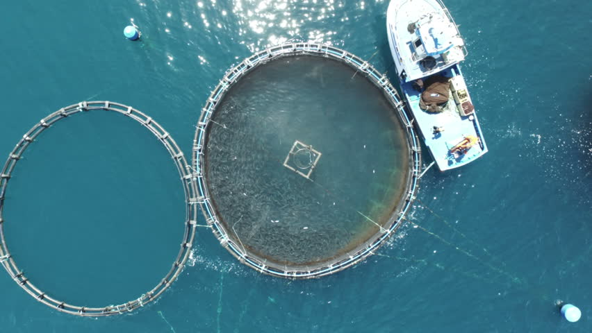 Fish Factory. Top aerial drone view. Full of fishes swimming. Circle factory. | Shutterstock HD Video #23769697