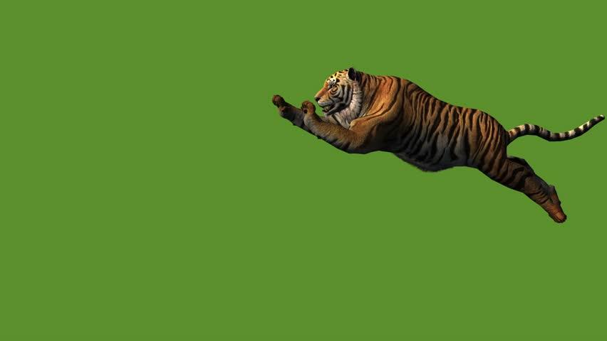 Tiger jumped to attack prey,wildlife animals habitat. cg_02017