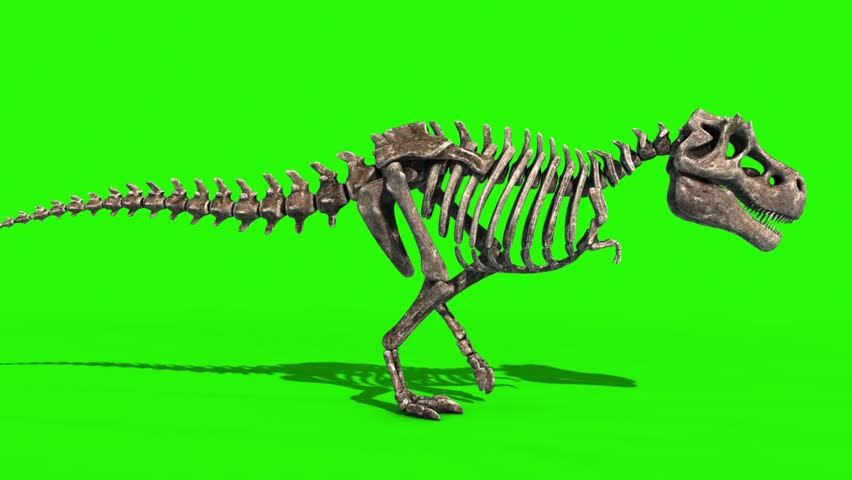TRex Skeleton Walk Side Jurassic World 3D Rendering green Screen