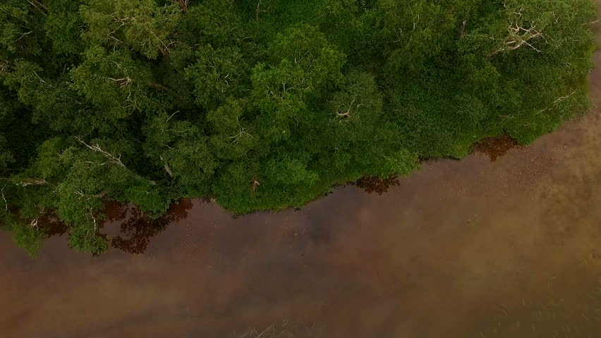 Flying over the forest. helicopter flies over the trees. Aerial View of Pinetrees | Shutterstock HD Video #24094975