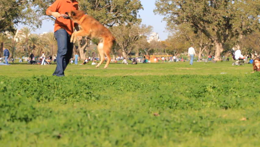 Man and dog playing in the park.