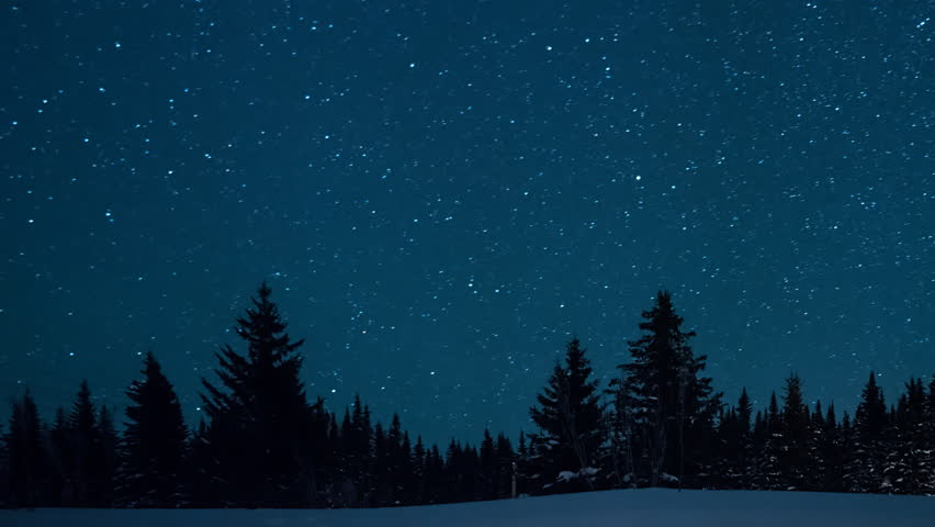 Starry sky in the background of fir trees. Moon rise.