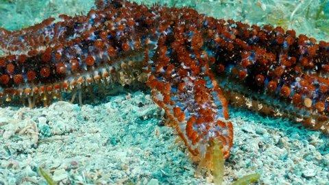 starfish close up underwater colorful macro