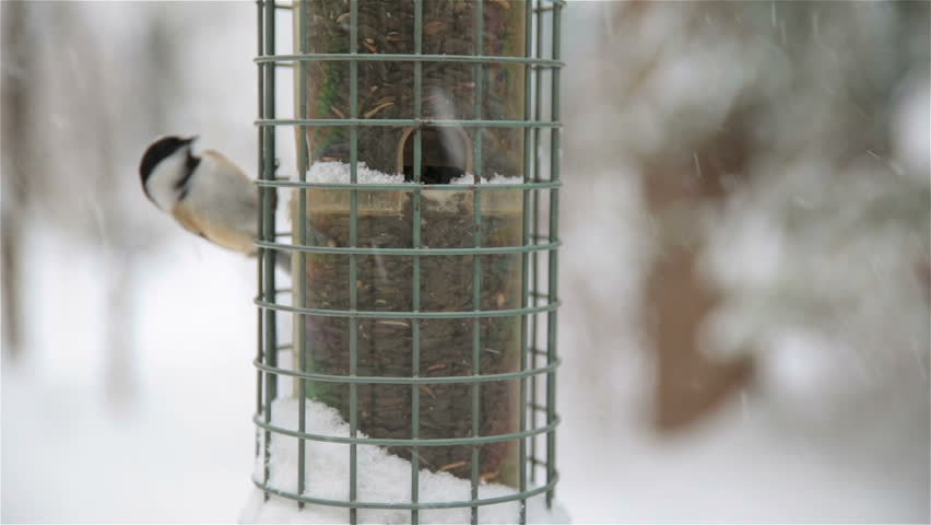 Chickadee bird on bird feeder, falling snow, upstate New York winter