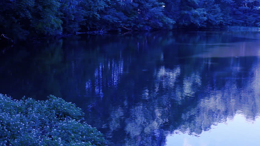 Blue Pond Near Forest at dusk