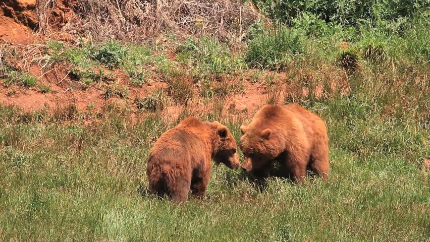 bears #2463125