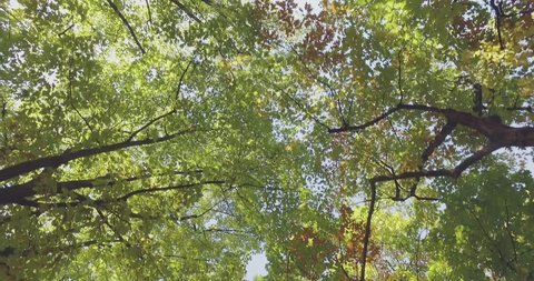 Walking under trees on walkway in urban city park or woods in summer sunny day. 4k POV looking up shot