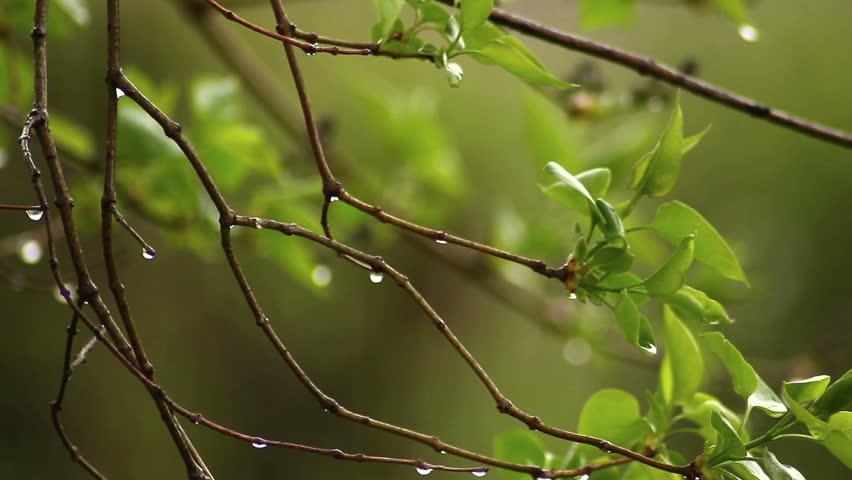 Image result for bird green leaf raindrop