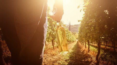 Summer landscape with vineyards and man walking on field with bottle of white wine for picnic. Wine making concept