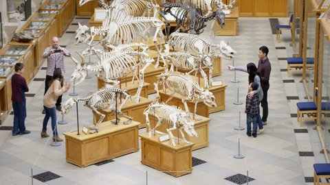 4K Families visiting a Natural History museum looking at the dinosaur exhibits