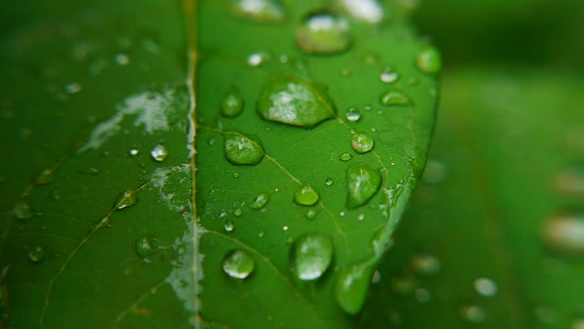 Clear raindrops form delicate patterns on a gently swaying leaf. #2529071