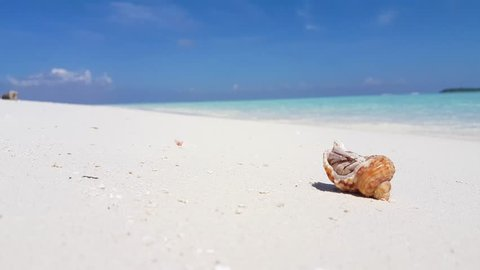 v01145 Maldives beautiful beach background white sandy tropical paradise island with blue sky sea water ocean 4k hermit crab
