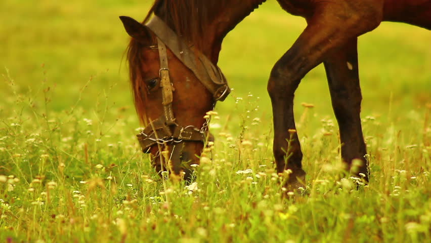 Closeup of horse eating grass #2555585
