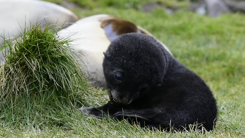 Header of pup