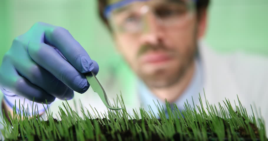 Researcher Work Wetting Wheat Seedlings Genetic Engineering Laboratory Close Up