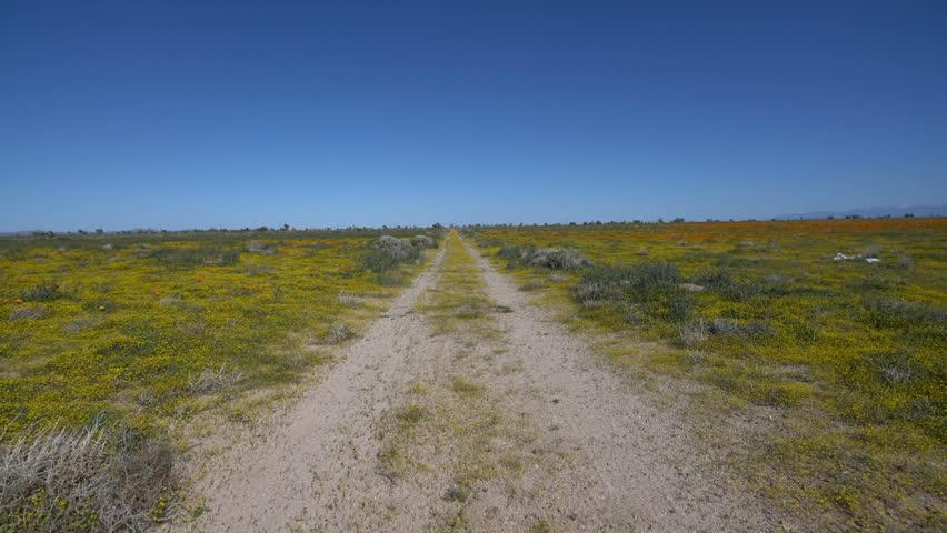Driving Plates Joshua Tree Spring Season 01 Flower Bloom Mojave Desert