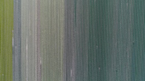 Aerial top down of rows of flowers, Holland. Looks like tapestry or abstract patterns.