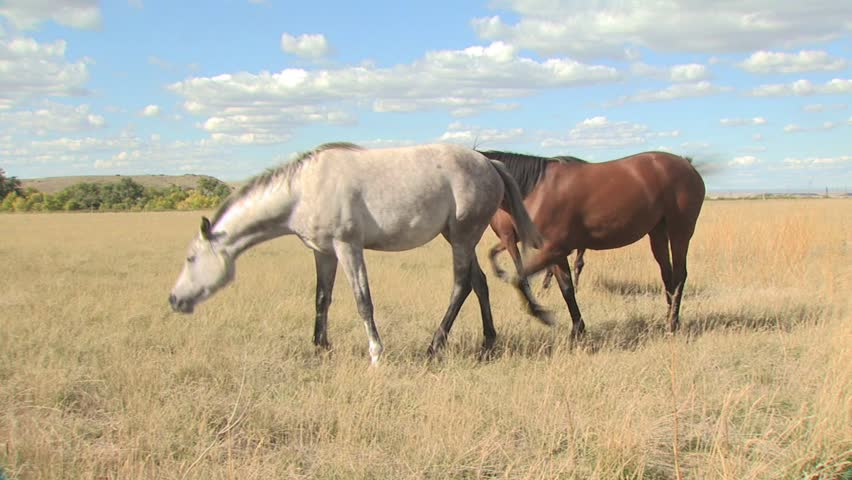 Several Horses In A Field On A Partly Cloudy Day | Shutterstock HD Video #2583155