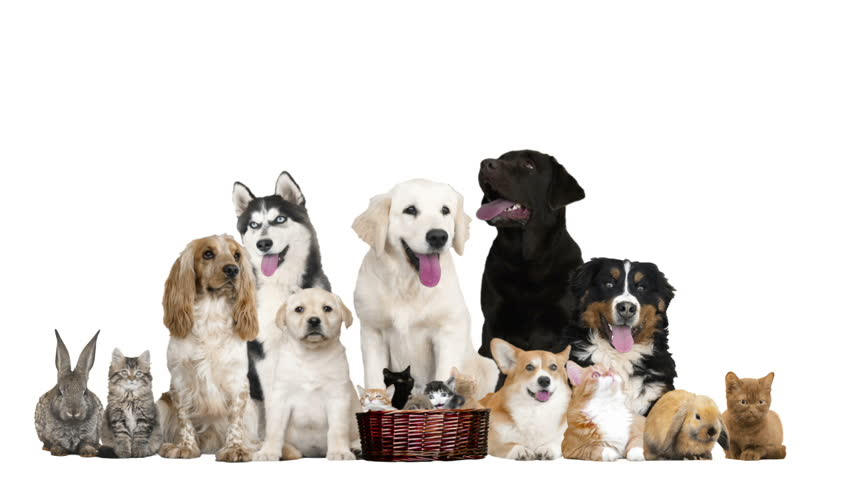 Funny Pets On A White Background Stock Footage Video ...