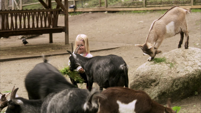 Children and goats at the zoo