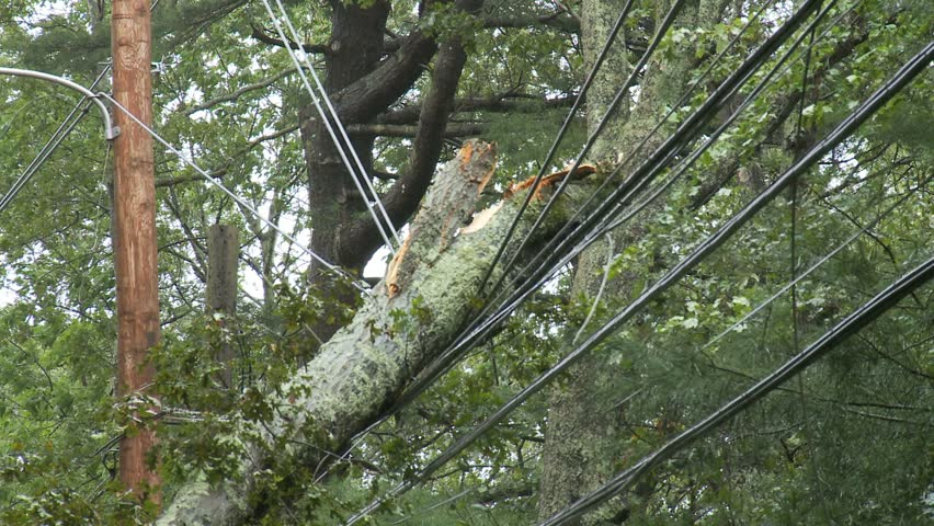 Storm damage -- large broken tree branches hanging on power lines